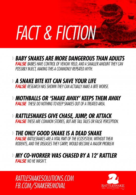Rattlesnakes Fact and Fiction