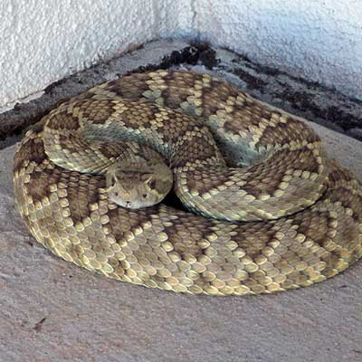 tucson snake removal wildlife services